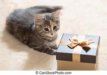 Cute gray kitten lies on a cream fur plaid next to a golden gift box