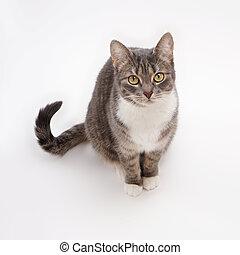 tabby cat - cute gray tabby cat looking up...