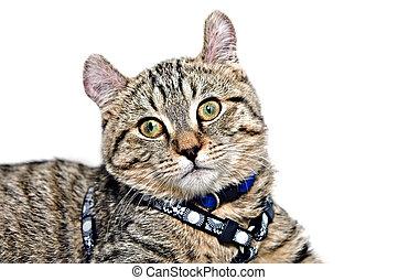 Cute Gray Tabby Cat