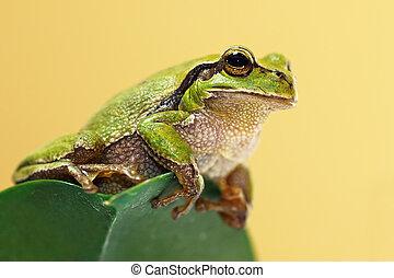 cute green tree frog on a leaf