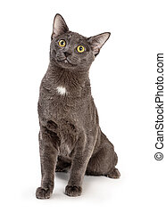 Cute Grey Cat Sitting Looking Up