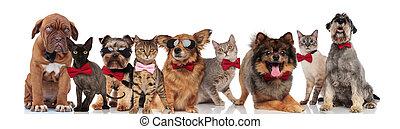 cute, grupo, elegante, gatos, cachorros, bowties
