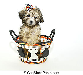 Cute Halloween Puppy