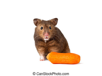 Cute hamster with carrot isolated w