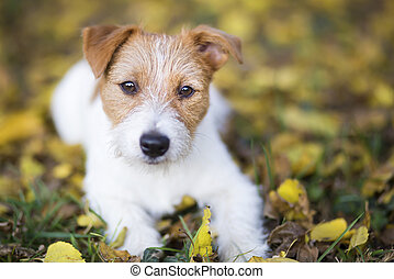 Cute happy pet dog puppy looking in the autumn leaves