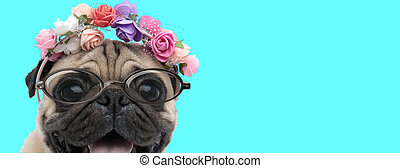 cute happy Pug dog wearing a headband with flowers
