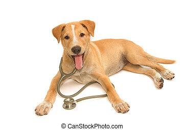 cute healthy puppy with a stethoscope