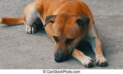 Cute homeless dogs lie on street - Cute homeless dogs lie on...