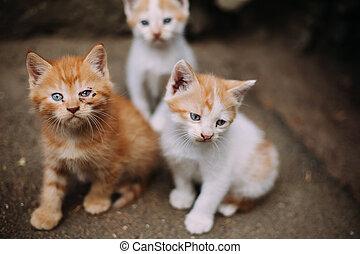 Cute homeless sick kittens on street in summer
