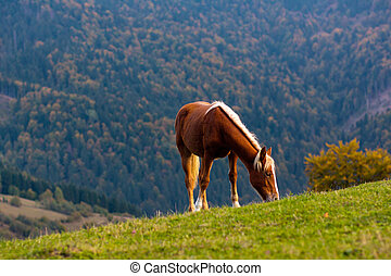 Cute horse in the Alps