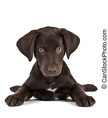 cute, hundehvalp