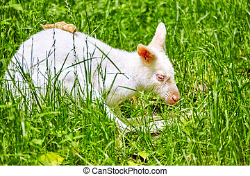Cute Kangaroo. - Cute kangaroo their natural habitat. ...