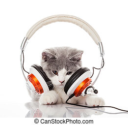 Cute kitten and headphones.  Young cat is listening to music wit