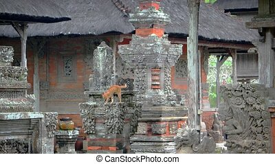 Adorable, orange kitten, climbing on ancient, intricately carved, stone sculptures at Taman Ayun, the royal Hindu temple in Bali, Indonesia. Video 4k UltraHD