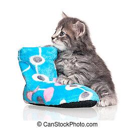 Cute kitten - Cute little kitten near fleece bootee isolated...