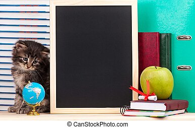 Cute kitten - Cute little kitten with school accessories and...