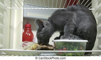 Cute kitten eating chicken leg inside domestic refrigerator