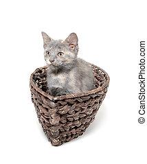 Cute kitten in a boat