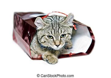 Cute Kitten in a Gift Bag