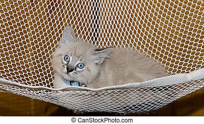 Cute Kitten in a Hammock