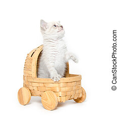 Cute kitten in a stroller