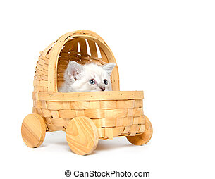 Cute kitten in a stroller