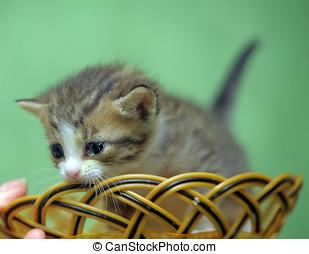 cute kitten in a wicker basket