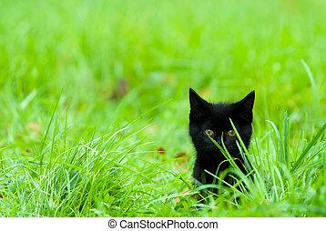 cute kitten in grass - a cute black kitten in the grass