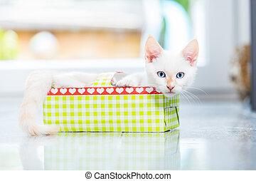 Cute kitten in holiday box