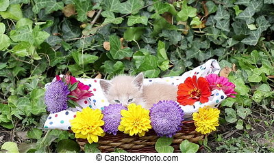 cute kitten in wicker basket