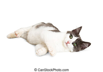 Cute Kitten Laying on Side Over White