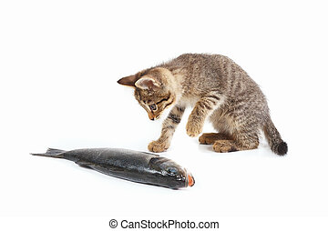 Cute kitten looks at a labrax fish on white background -...