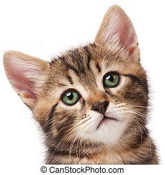Cute kitten - Lovely kitten looks faithfully up over white ...