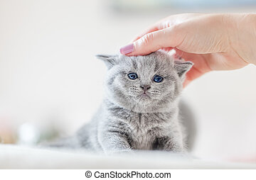 Cute kitten loves being stroked by woman's hand