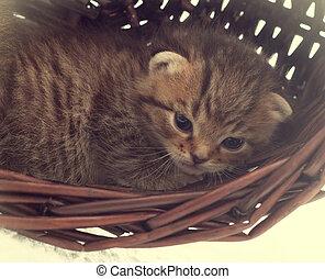 cute kitten lying in a wicker basket