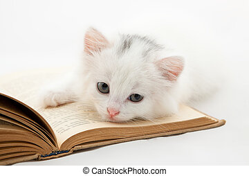 Cute kitten lying on old book isolated on white