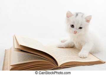 Cute kitten lying on old book