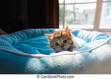 Cute kitten on bed