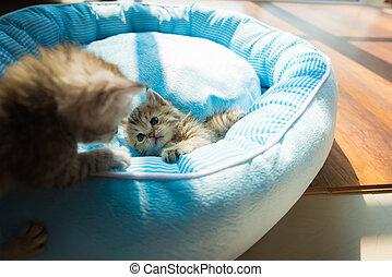 Cute kitten on bed