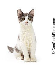 Cute Kitten on White Background