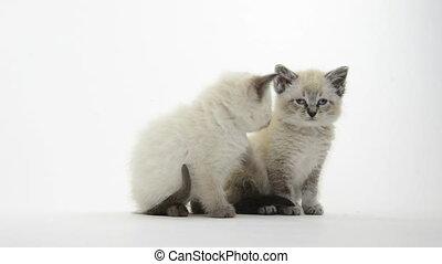 Cute kitten on white