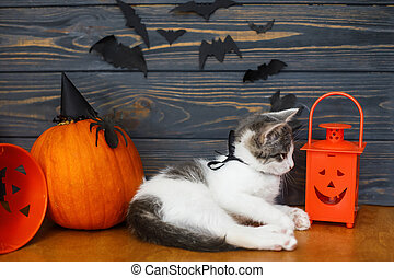 Cute kitten playing at Jack o lantern candy bucket  on background of pumpkin with bats. Trick or treat! Kitten posing at holiday decorations, celebrating halloween at home