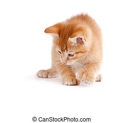 Cute kitten playing on white. - Cute orange kitten with ...