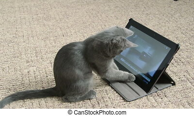 Cute kitten playing with digital tablet computer taking...