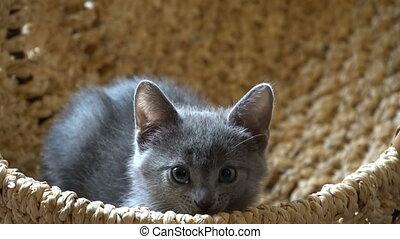 Cute kitten resting in the room