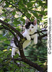 Cute kitten resting on the tree branch - Cute three colored...