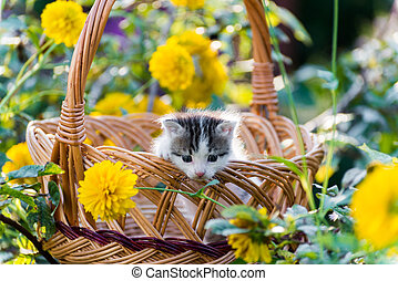 Cute kitten sitting in a basket on floral lawn