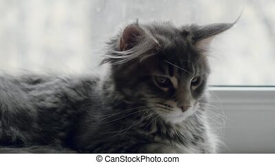 Cute kitten sitting on the window and looking On The winter...