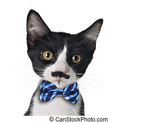 Cute kitten - Cute black and white kitten with moustache and...