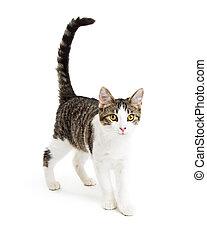 Cute Kitten Walking Forward on White